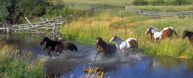 horses-running-ranch-stream-water-plants-trees