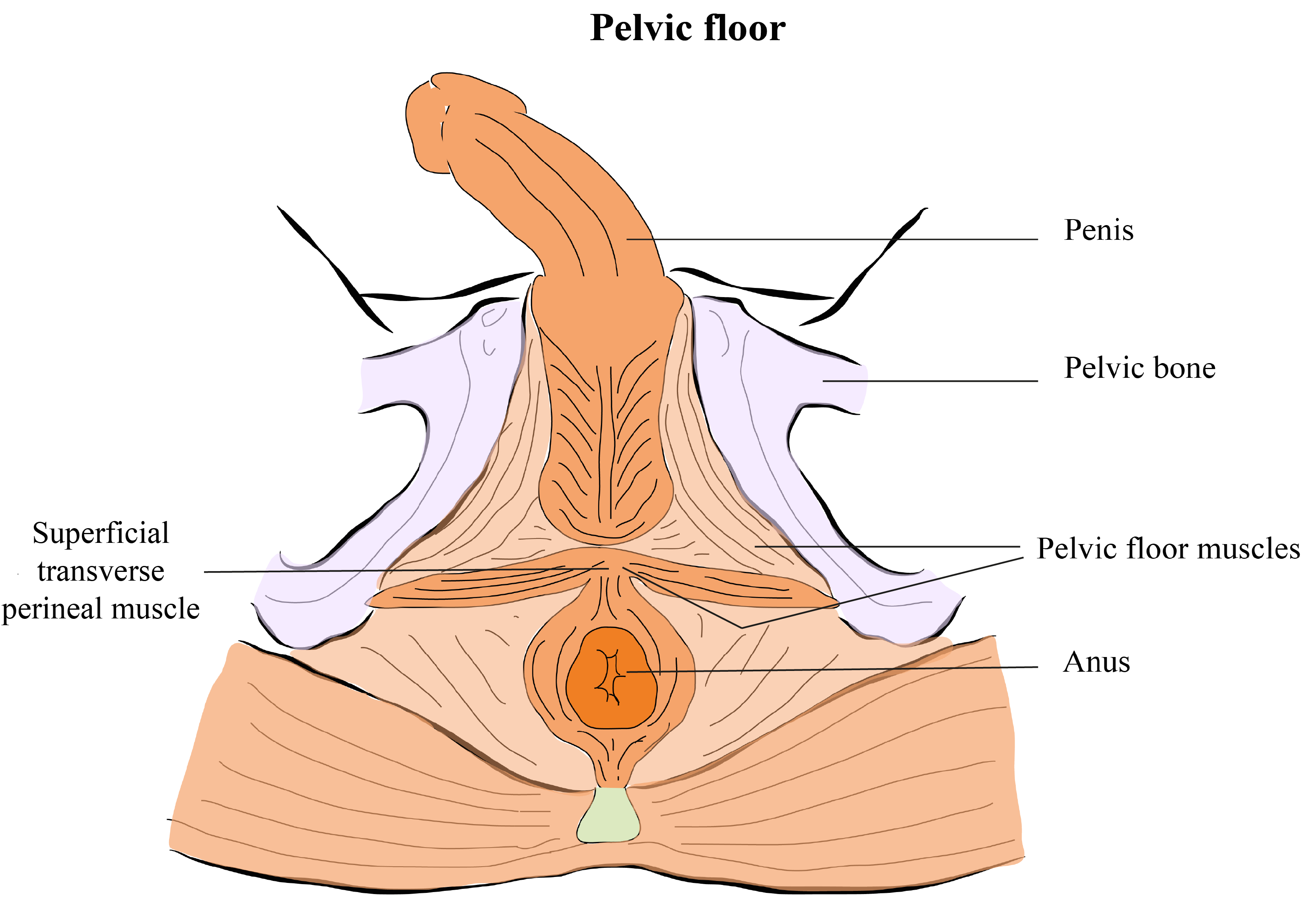 Pelvic floor exercises - how to do them